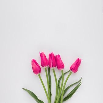 Bündel rosa blumen auf grünen stielen