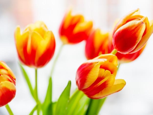 Bündel rote tilups im vase. frisch gepflückte bunte blumen.