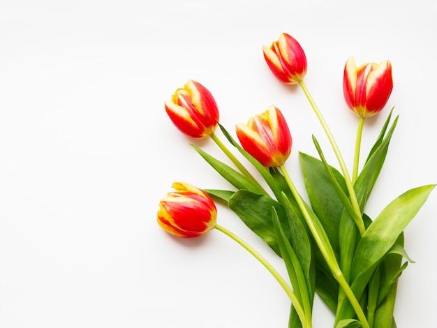 Bündel rote tulpen auf weiß. fünf frisch gepflückte bunte blumen.