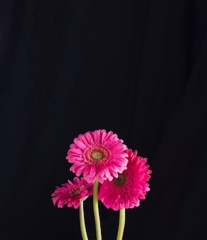 Bündel schöne frische helle rosa blüte