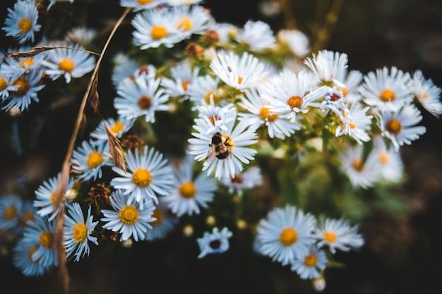 Bündel von blüten mit weißen blütenblättern