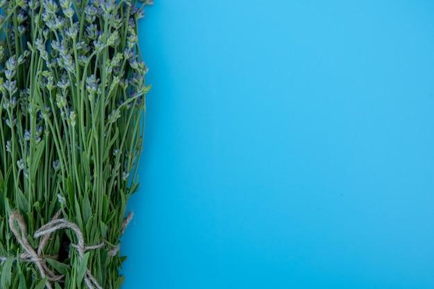 Bündel von lavendelblumen lokalisiert auf blauem hintergrund