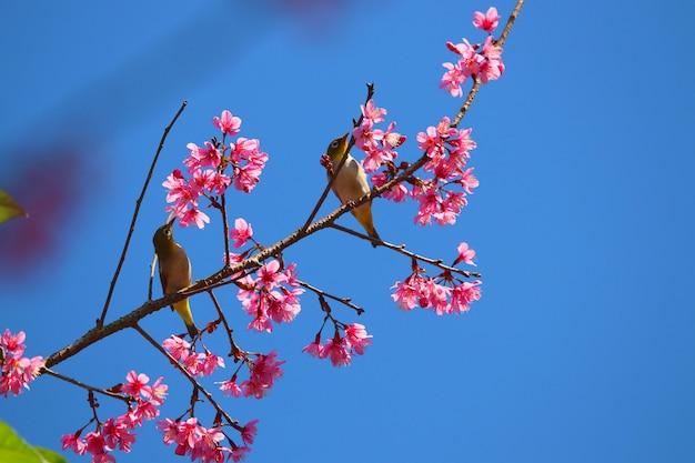 Bulbul netter vogel mit bunter blume der himalajablüte mit hintergrund des blauen himmels