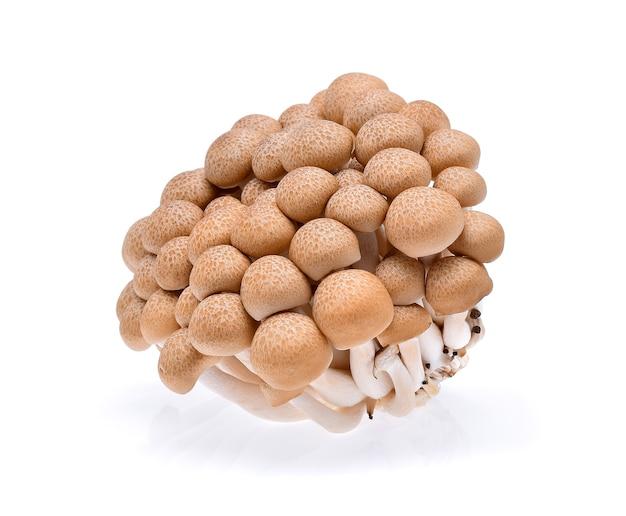 Buna shimeji pilz lokalisiert auf weiß