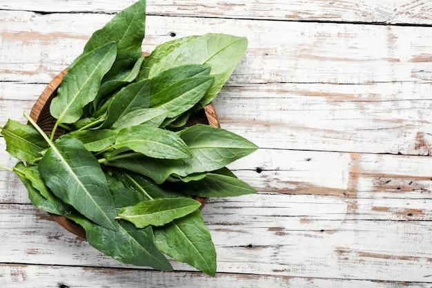 Bund frischer spinat