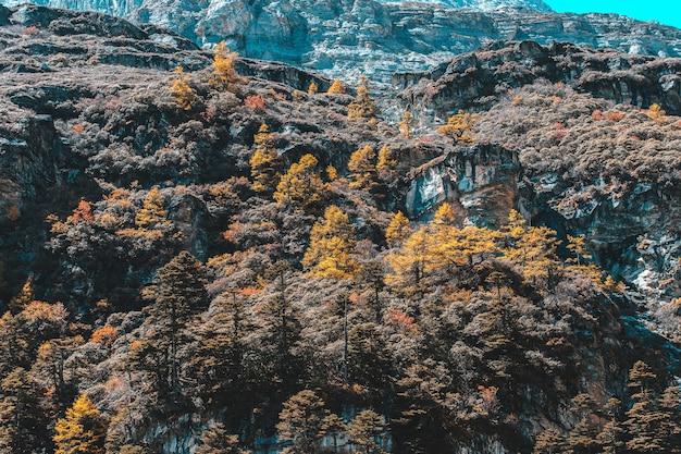 Bunt im herbstwald und im schneeberg im naturschutzgebiet yading