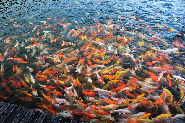 Bunt von der koi-handwerksfischschwimmen in einem see, abstrakter unschärfehintergrund