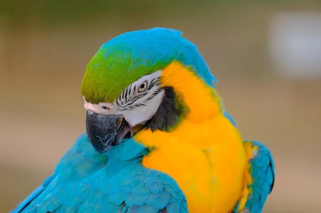 Bunt von einem vogel