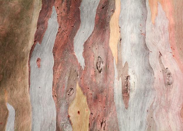 Bunte abstrakte musterbeschaffenheit der eukalyptusbaumrinde
