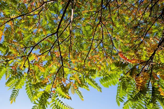 Bunte bäume im wald im herbst, das laub der bäume ändert seine farbe während des laubfalls