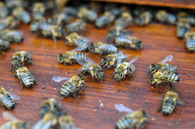 Bunte bewegliche bienen auf hölzernem brett des bienenstocks