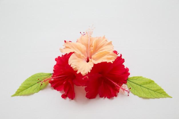 Bunte blüten mit grünen blättern als dekoration