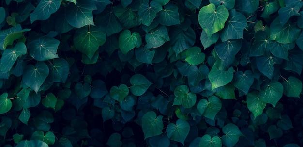 Bunte blume der tropischen blätter auf dunklem tropischem laubnaturhintergrund dunkelgrüne laubnatur