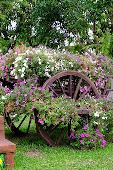 Bunte blumen im garten plumeriablumenblühen schöne blumen im garten, der im sommer blüht.