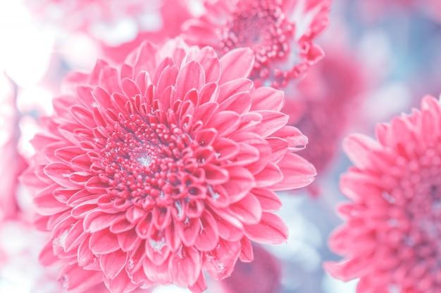 Bunte blumenchrysantheme gemacht mit steigung für hintergrund, zusammenfassung, beschaffenheit, weich und verwischt