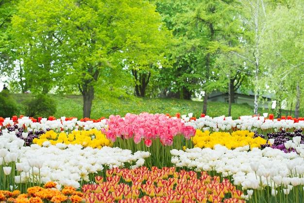 Bunte blumentulpen im grünen schönen park