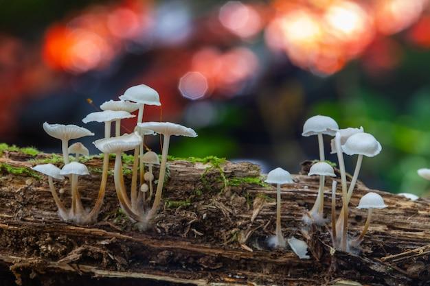 Bunte bokeh-lichter und pilze im regenwald
