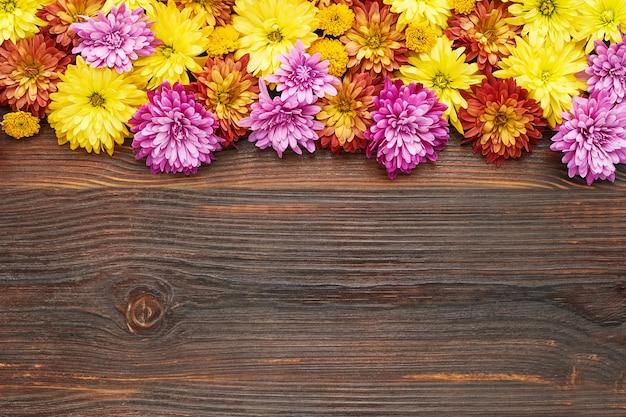 Bunte chrysanthemenblüten auf dunklem holzhintergrund flach kopienraum