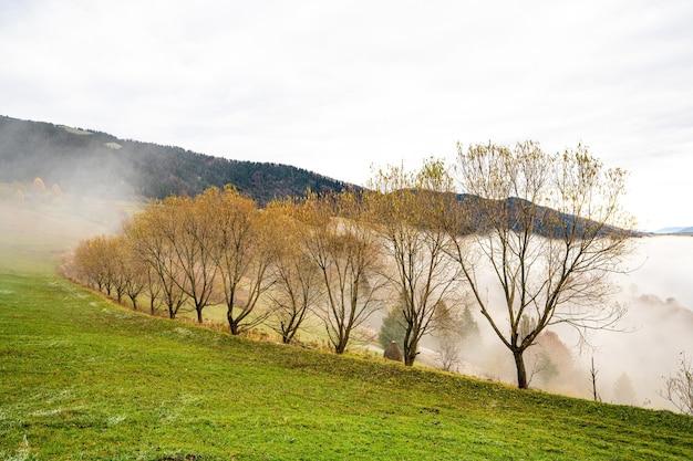 Bunte dichte wälder in den warmen grünen bergen der karpaten, bedeckt mit dichtem grauem nebel