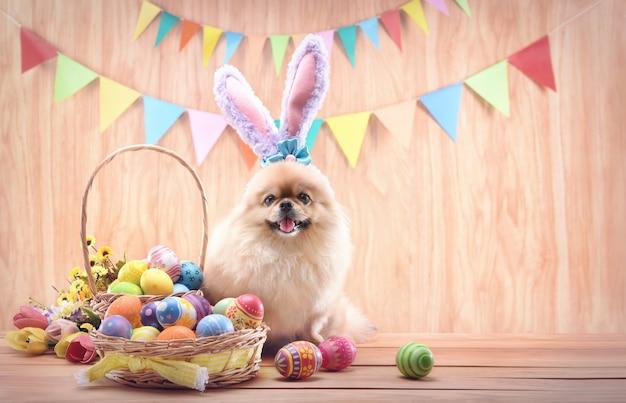 Bunte eier des glücklichen ostertages im korb mit blumen und niedlichen welpen pommerschen mischling pekingese hund tragen sie hasenohren, die auf holzbodenhintergrund sitzen.