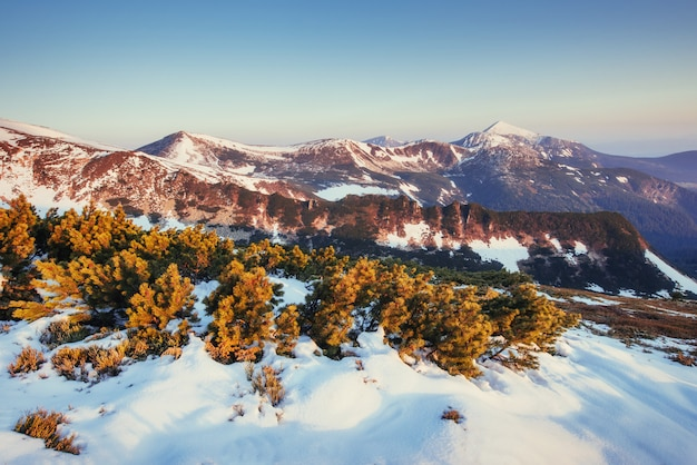 Bunte frühlingslandschaft der gebirgszüge in den karpaten