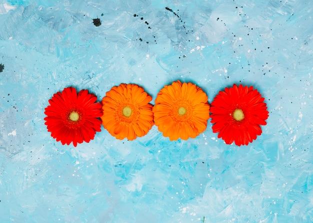 Bunte gerberablumen auf blauer tabelle