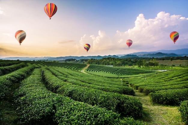Bunte heißluftballone, die über teeplantagenlandschaft bei sonnenuntergang fliegen