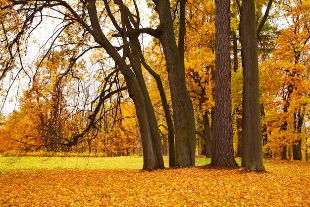 Bunte herbstahornbäume im park