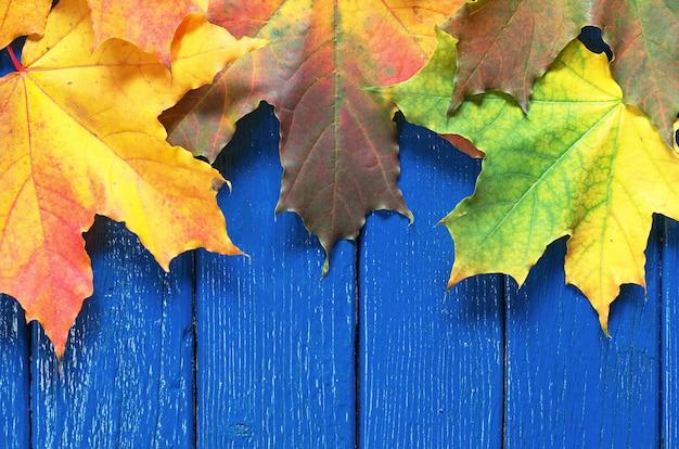 Bunte herbstahornblätter auf blauem holztisch