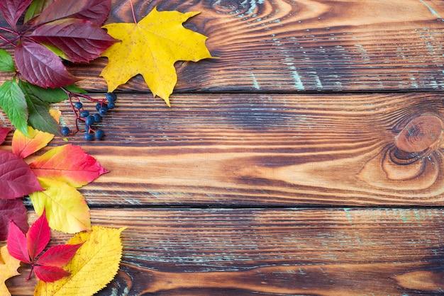 Bunte herbstahornblätter auf rustikalem hölzernem hintergrund. lebenszyklus des herbstblattes.