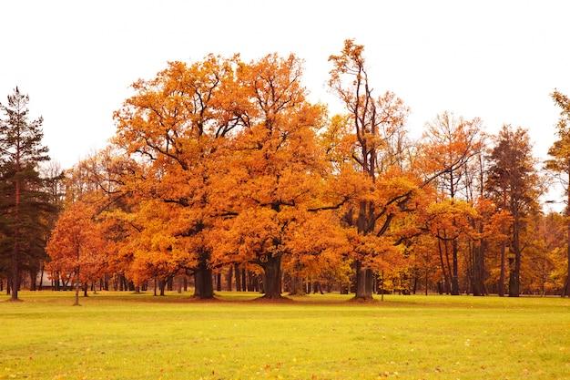 Bunte herbstbäume im park