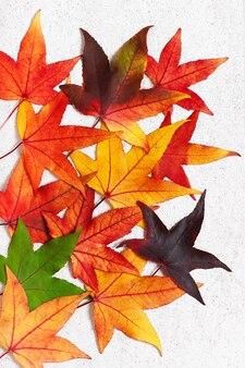 Bunte herbstblätter des amberbaumes auf dem hellen steinhintergrund