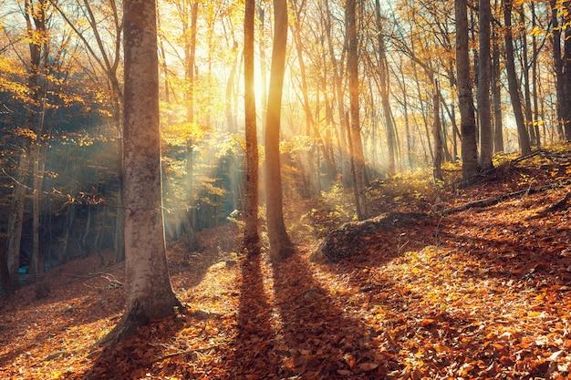 Bunte herbstlandschaft mit bäumen und orangenblättern.