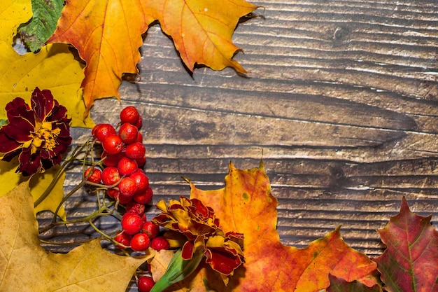 Bunte herbstzusammensetzung der gelben blätter, der äpfel, der kürbisse auf einem dunkelbraunen hölzernen hintergrund.