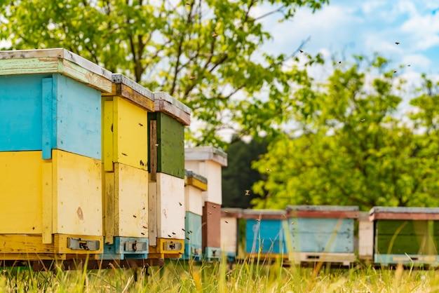 Bunte hölzerne bienenstöcke im gras und bienen, die blütenstaub für honig holen
