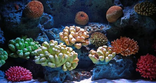Bunte korallen im aquariumbecken