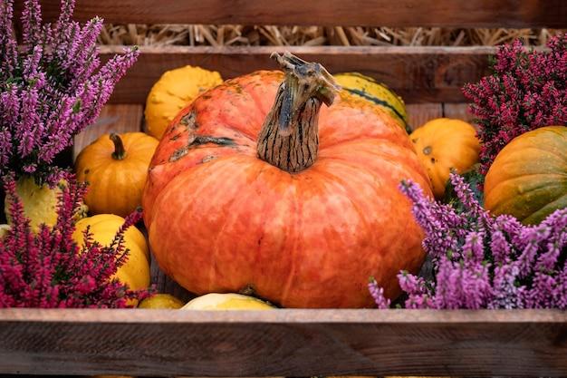 Bunte kürbisse für halloween-dekoration.