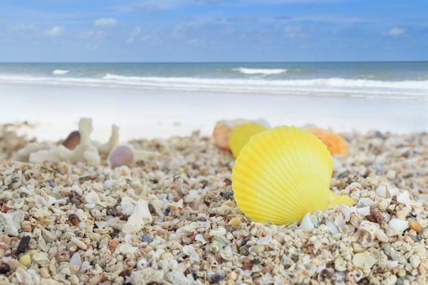 Bunte muscheln auf sandstrand-hintergrundsammlung