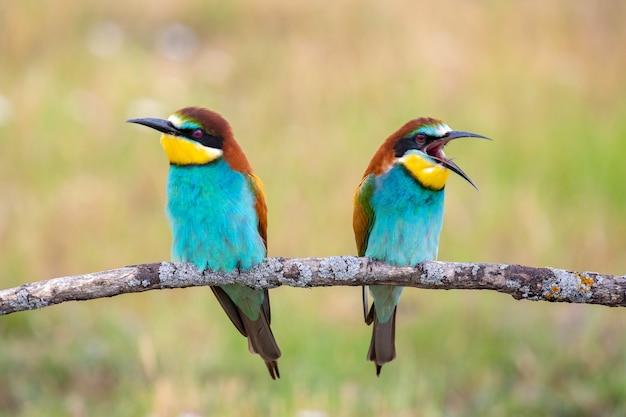 Bunte paar vögel sitzen auf einem ast