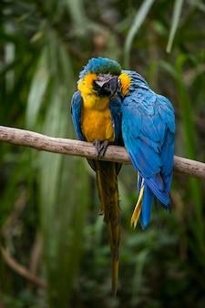 Bunte papageien auf einem ast