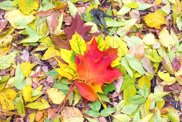 Bunte rote, orange und grüne herbstblätter auf dem boden. herbst hintergrund