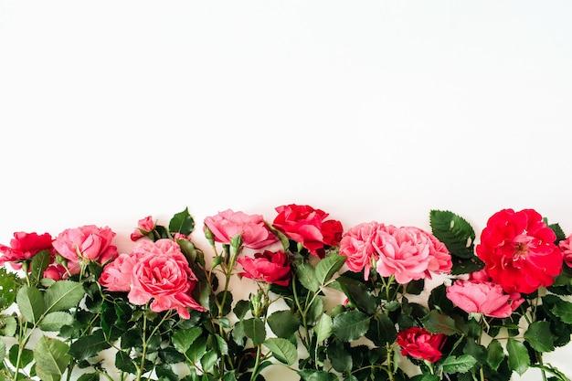 Bunte rote und rosa rosenblumen auf weißer oberfläche