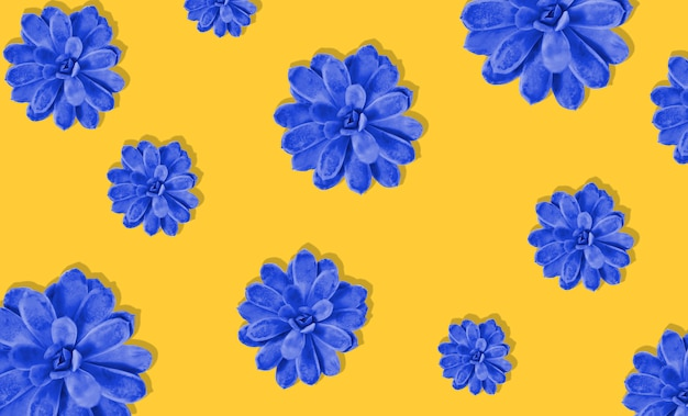 Bunte saftige anlage auf korallenrotem farbhintergrund. harter schatten. hartes licht. blau und gelb.