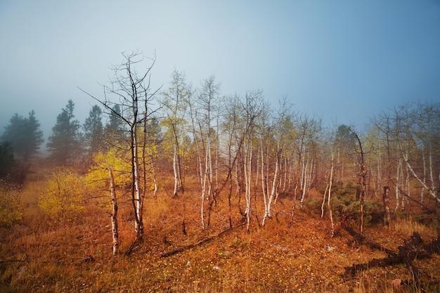 Bunte sonnige waldszene in der herbstsaison mit gelben bäumen im klaren tag.