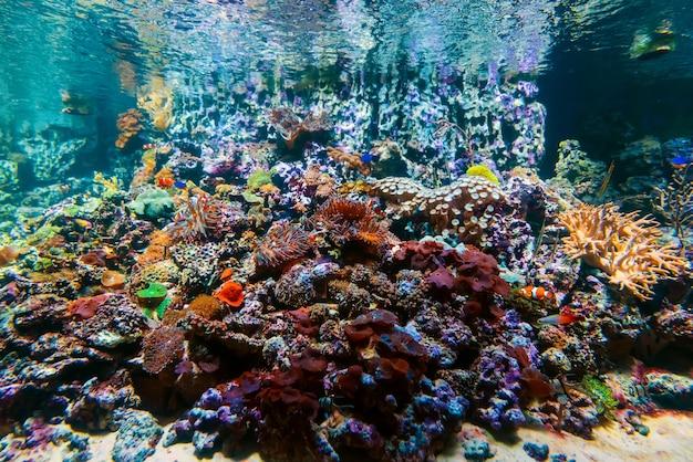 Bunte tropische schöne exotische fische schwimmen zwischen korallenriffen und algen