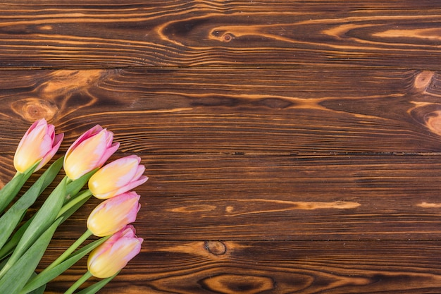 Bunte tulpen in der ecke