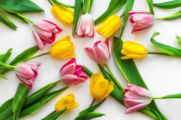 Bunte tulpen sind auf weiß ausgelegt
