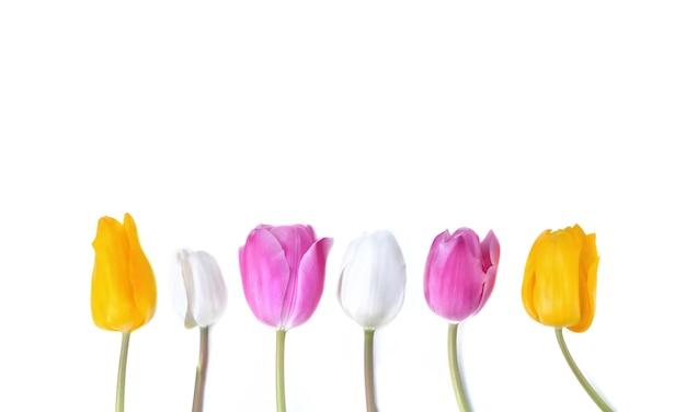 Bunte und hübsche tulpen, die auf stamm stehen