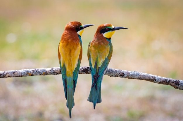 Bunte vögel auf einem ast