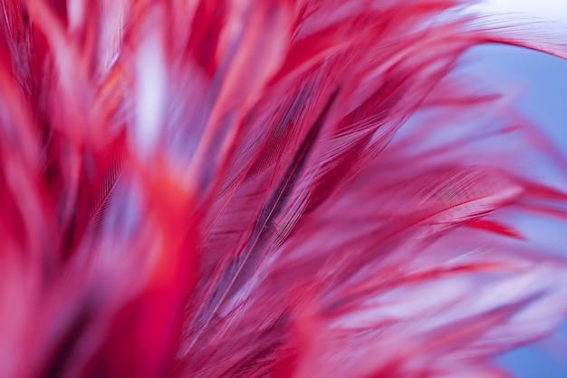 Bunte vogel- und hühnerfedern in der weichen und unschärfeart für den hintergrund, abstrakte kunst